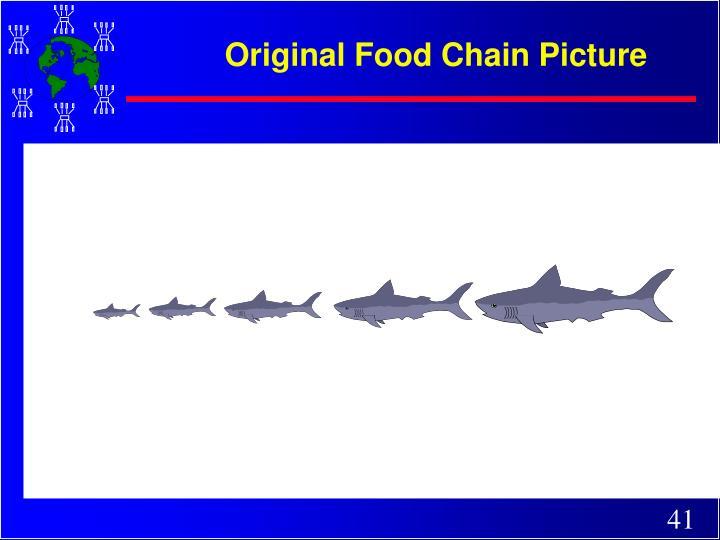 Original Food Chain Picture