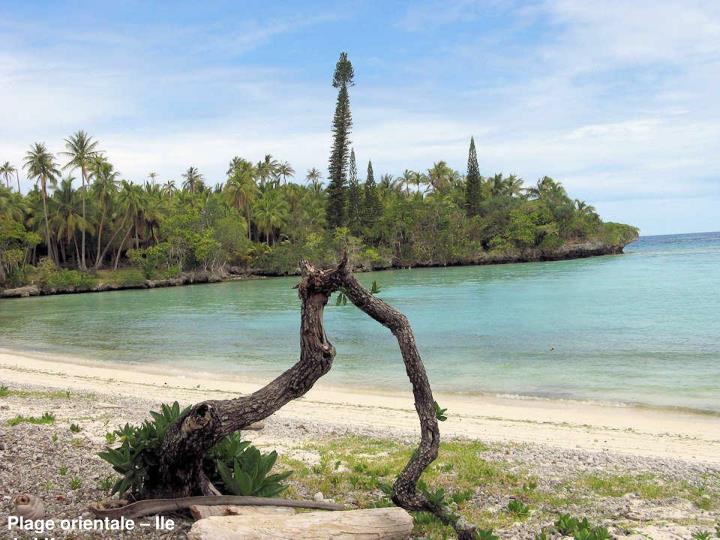 Plage orientale – Ile de Lifou