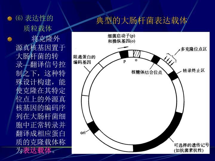 典型的大肠杆菌表达载体