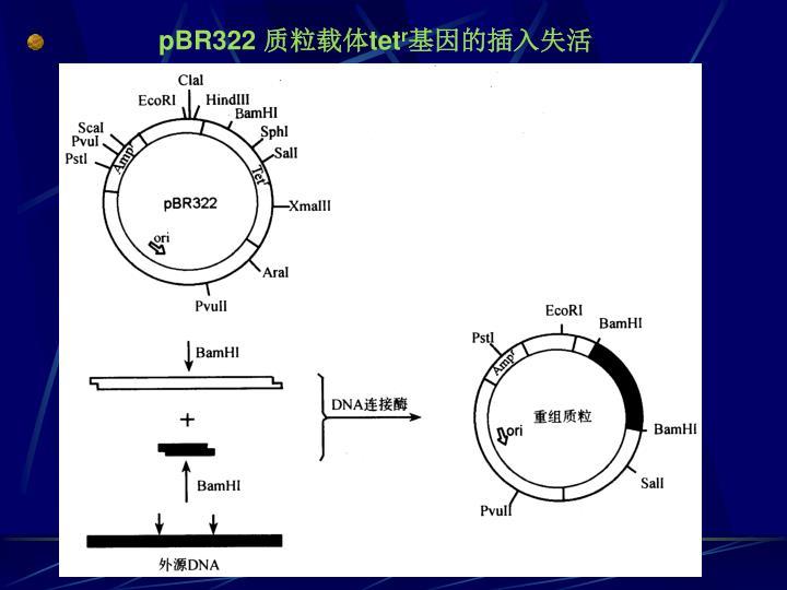 pBR322