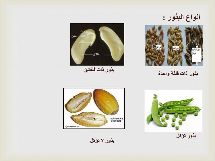 انواع البذور :