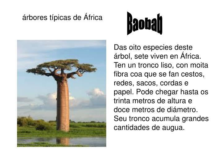 árbores típicas de África