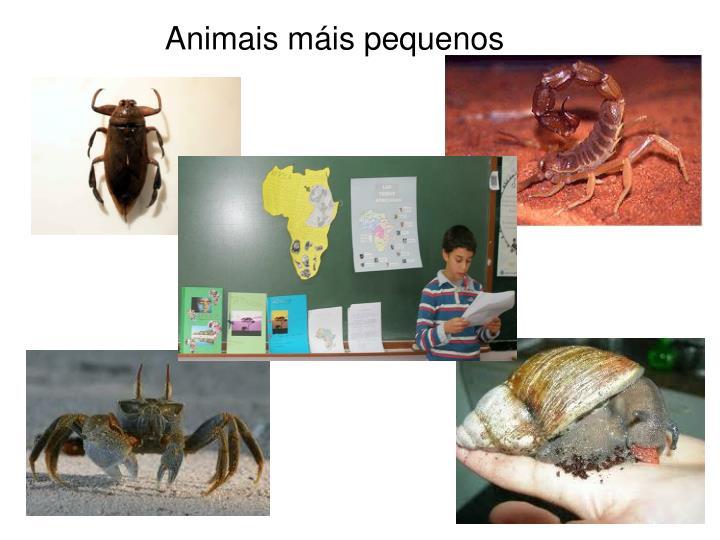 Animais máis pequenos