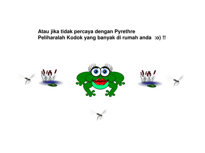 Atau jika tidak percaya dengan Pyrethre