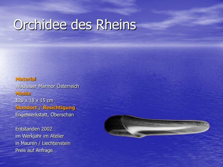 Orchidee des Rheins