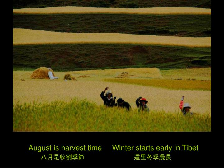 August is harvest time     Winter starts early in Tibet