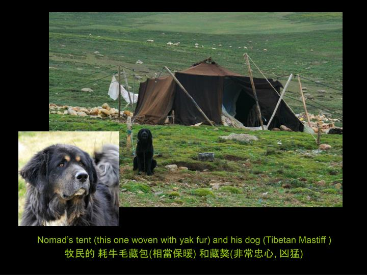 Nomad's tent (this one woven with yak fur) and his dog (Tibetan Mastiff )