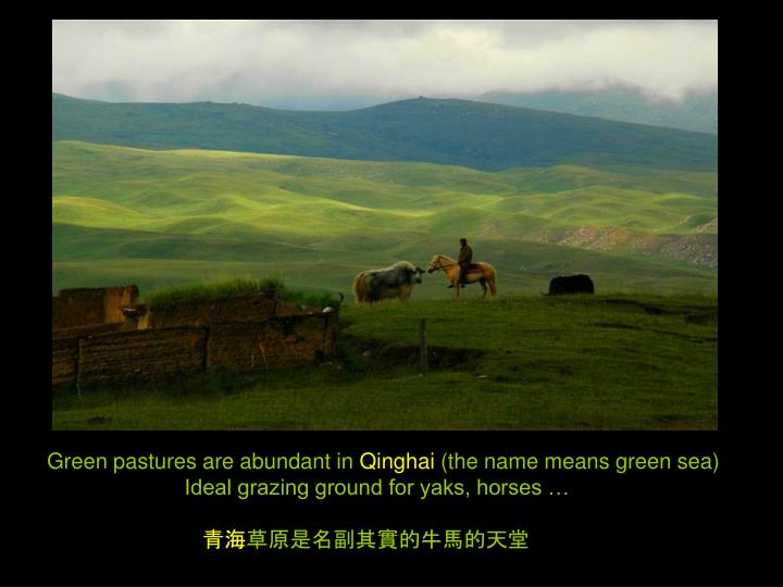 Green pastures are abundant in