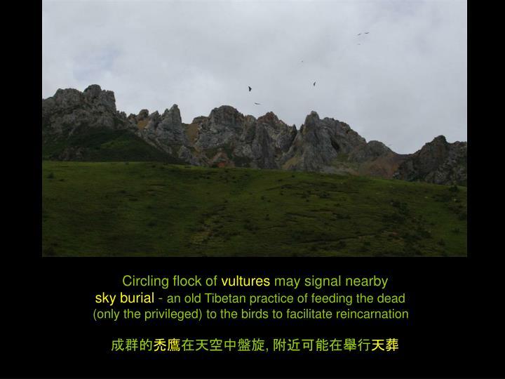 Circling flock of