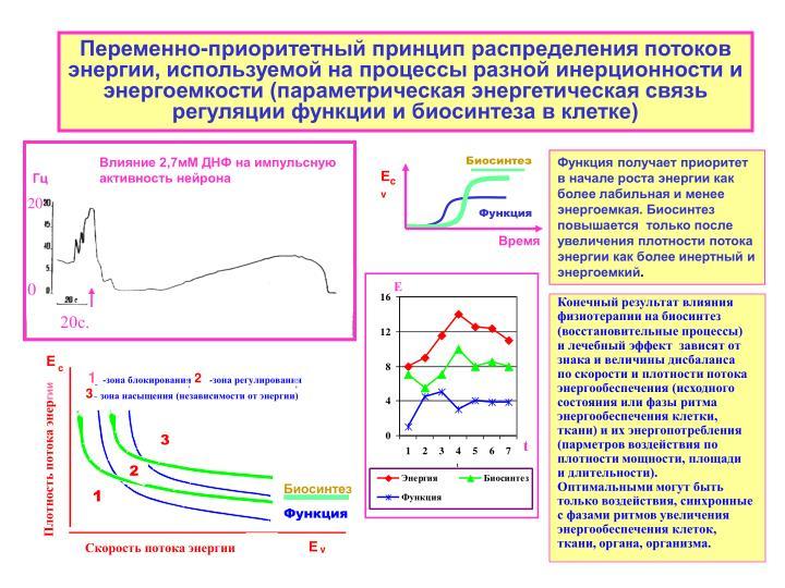 Переменно-приоритетный принцип распределения потоков энергии, используемой на процессы разной инерционности и энергоемкости (параметрическая энергетическая связь регуляции функции и биосинтеза в клетке)