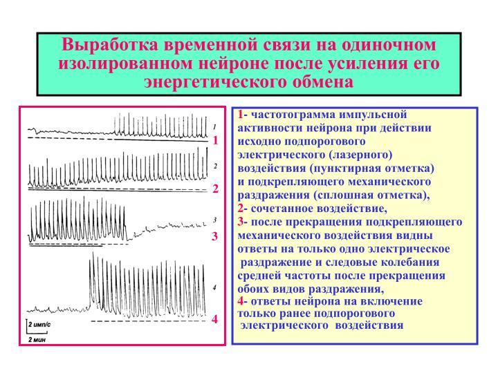 Выработка временной связи на одиночном изолированном нейроне после усиления его энергетического обмена
