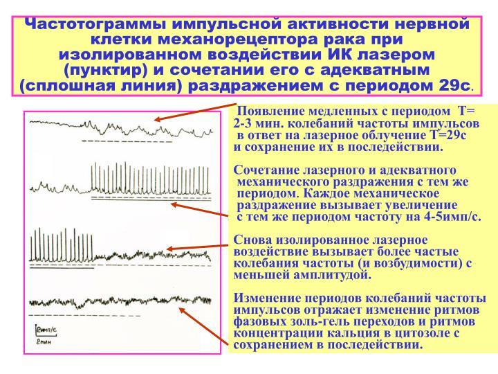 Частотограммы импульсной активности нервной клетки механорецептора рака при изолированном воздействии ИК лазером (пунктир) и сочетании его с адекватным (сплошная линия) раздражением с периодом 29с