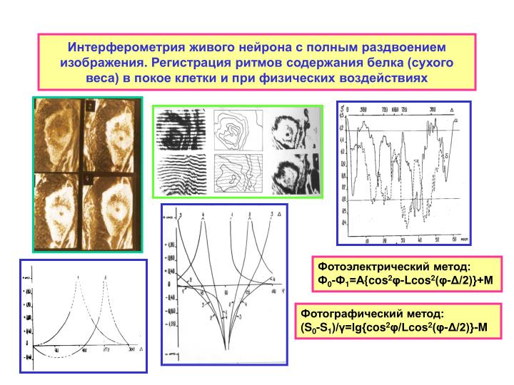 Интерферометрия живого нейрона с полным раздвоением изображения. Регистрация ритмов содержания белка (сухого веса) в покое клетки и при физических воздействиях