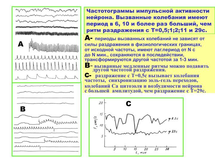 Частотограммы импульсной активности нейрона. Вызванные колебания имеют период в 6, 10 и более раз больший, чем ритм раздражения с Т=0,5;1;2;11 и 29с.