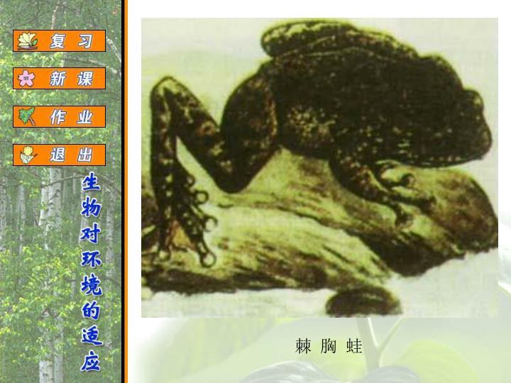 棘 胸 蛙
