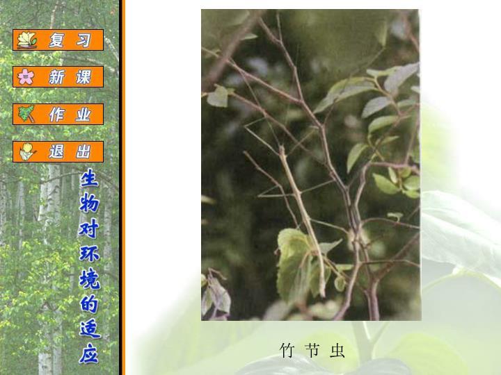 竹  节  虫