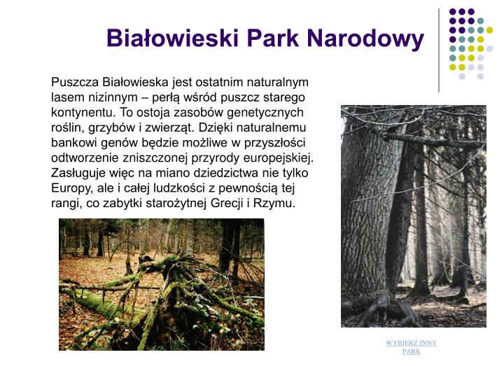 Biaowieski Park Narodowy