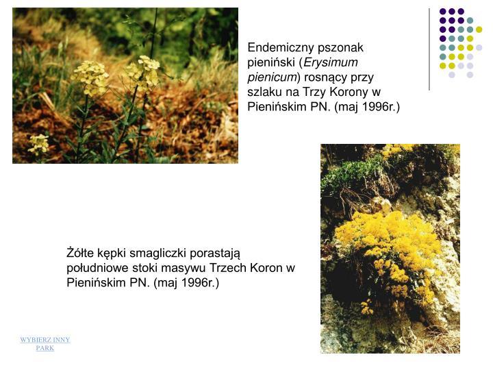 Endemiczny pszonak pieniski (