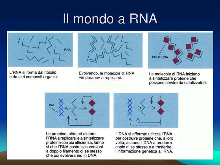 Il mondo a RNA