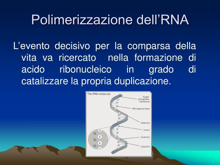 Polimerizzazione dell'RNA