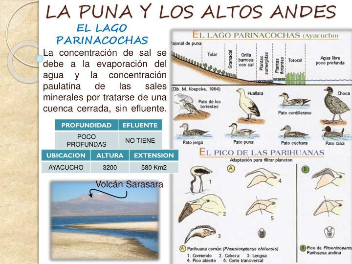 LA PUNA Y LOS ALTOS ANDES