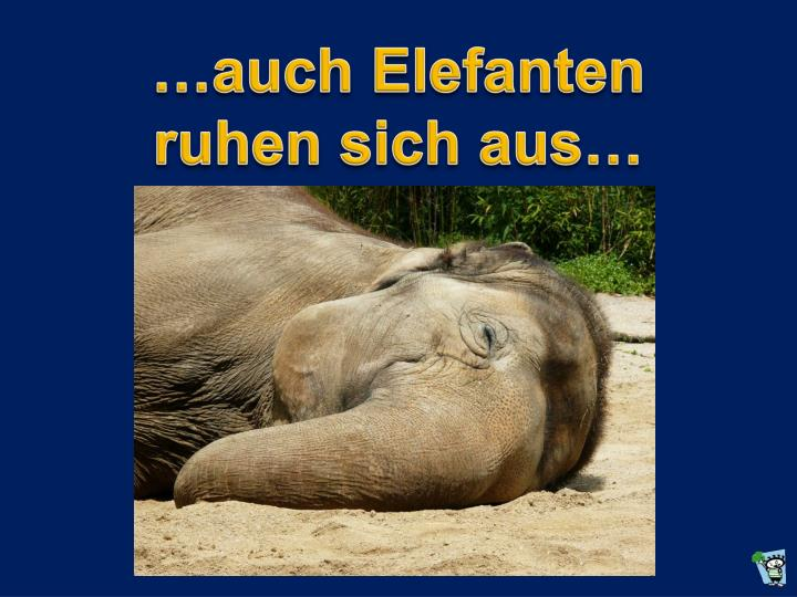 …auch Elefanten