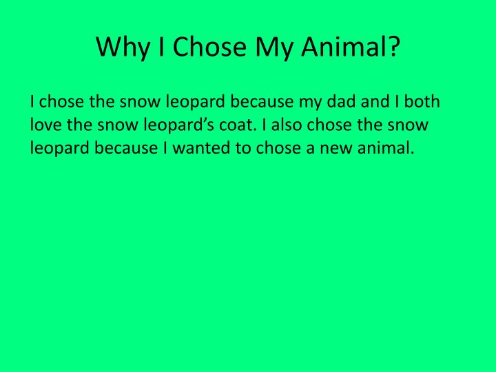 Why I Chose My Animal?