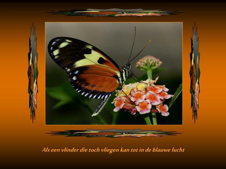 Als een vlinder die toch vliegen kan tot in de blauwe lucht