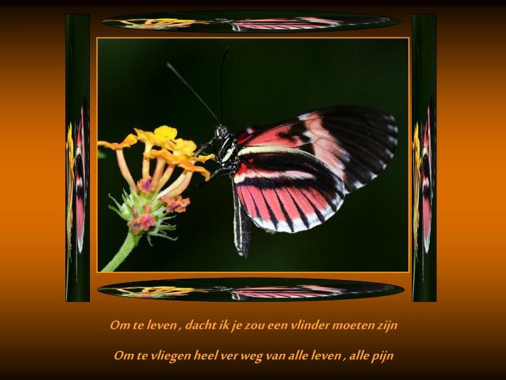 Om te leven , dacht ik je zou een vlinder moeten zijn