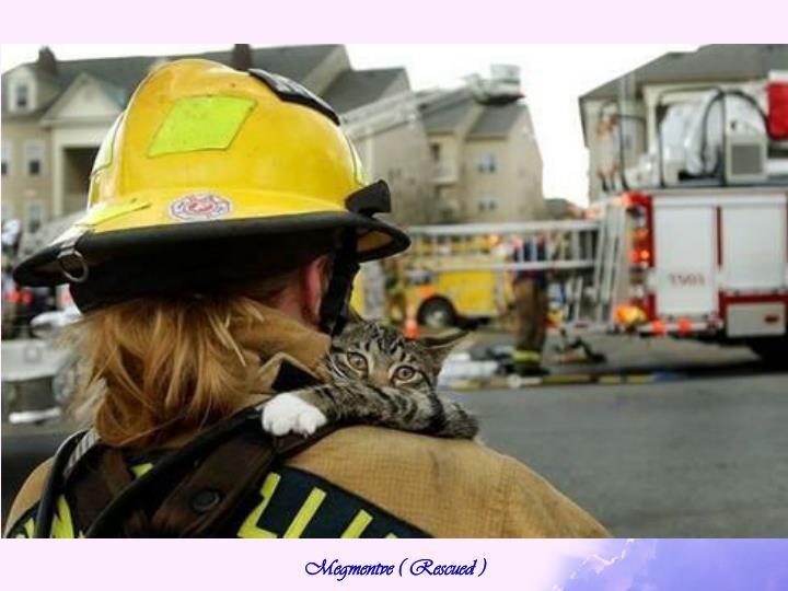 Megmentve ( Rescued )