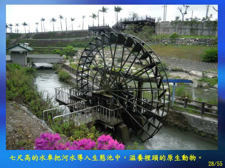 七尺高的水車把河水導入生態池中,滋養裡頭的原生動物。