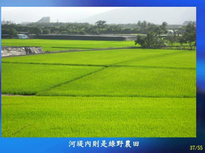 河堤內則是綠野農田