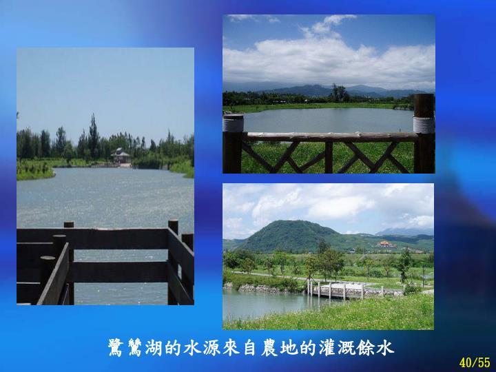 鷺鷥湖的水源來自農地的灌溉餘水