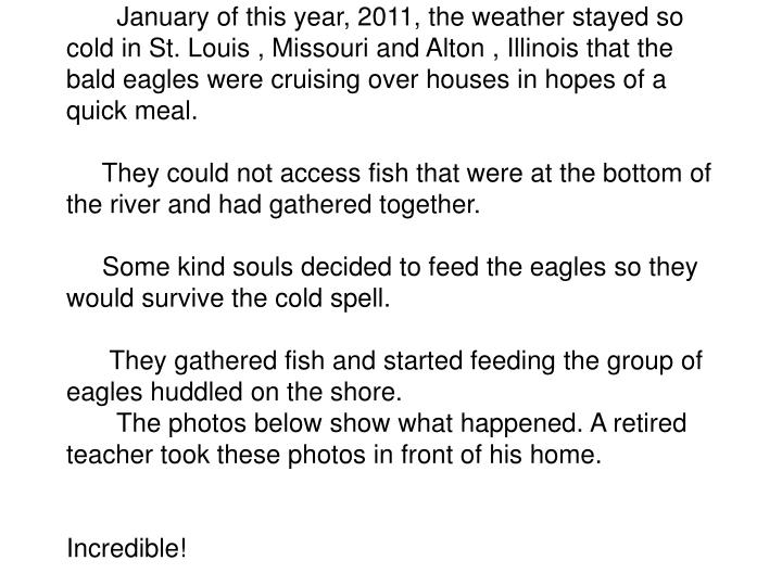 January of this year, 2011, the weather stayed so cold in St. Louis , Missouri and Alton , Illinois that the bald eagles were cruising over houses in hopes of a quick meal.