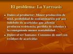 el problema la varroasis1