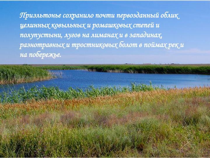 Приэльтонье сохранило почти первозданный облик целинных ковыльных и ромашковых степей и полупустыни, лугов на лиманах и в западинах, разнотравных и тростниковых болот в поймах рек и на побережье.
