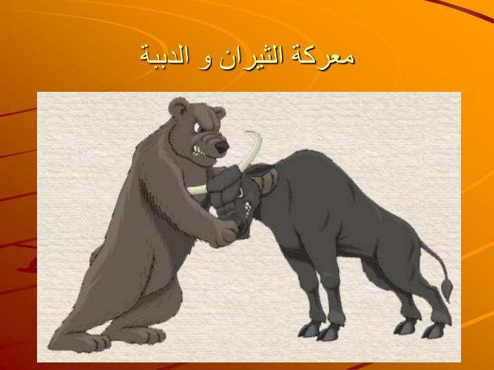 معركة الثيران و الدببة