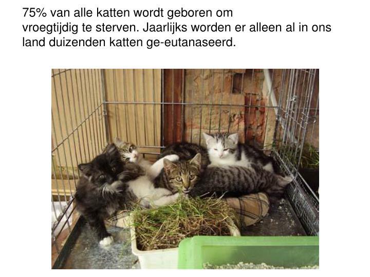 75% van alle katten wordt geboren om