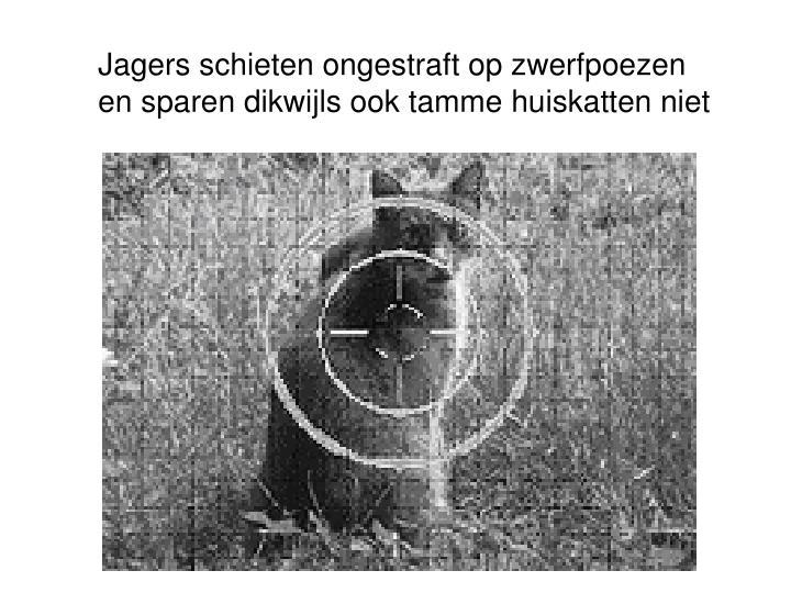 Jagers schieten ongestraft op zwerfpoezen