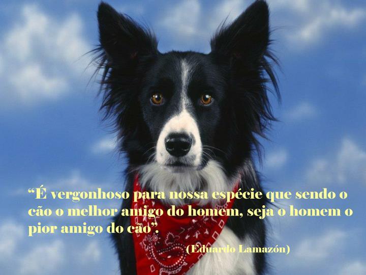 """""""É vergonhoso para nossa espécie que sendo o cão o melhor amigo do homem, seja o homem o pior amigo do cão""""."""