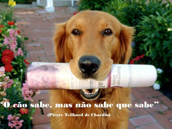 """""""O cão sabe, mas não sabe que sabe"""""""