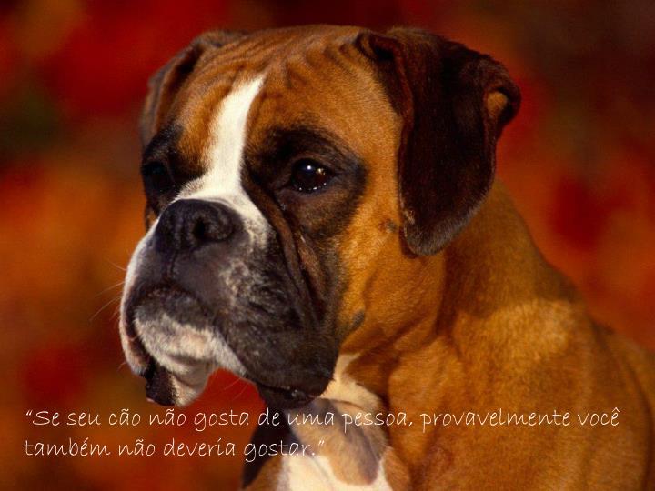 """""""Se seu cão não gosta de uma pessoa, provavelmente você  também não deveria gostar."""""""