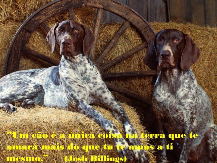 """""""Um cão é a única coisa na terra que te amará mais do que tu te amas a ti mesmo."""""""