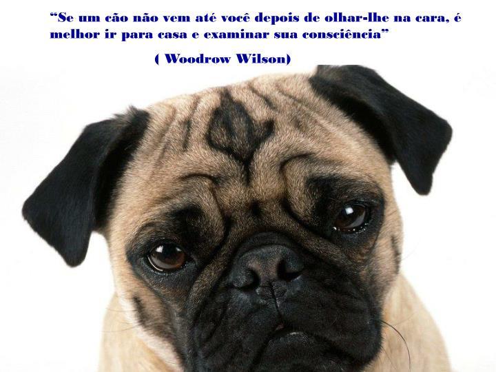 """""""Se um cão não vem até você depois de olhar-lhe na cara, é melhor ir para casa e examinar sua consciência"""""""
