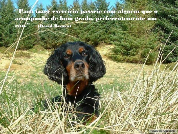 """""""Para fazer exercício passeie com alguém que o acompanhe de bom grado, preferentemente um cão."""""""
