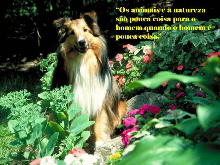 """""""Os animais e a natureza são pouca coisa para o homem quando o homem é pouca coisa."""""""