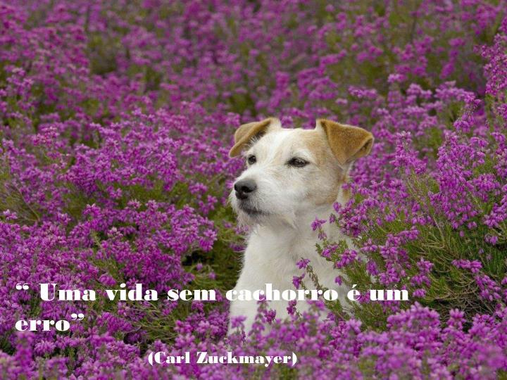""""""" Uma vida sem cachorro é um erro"""""""