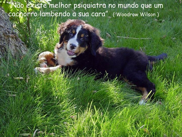 """""""Não existe melhor psiquiatra no mundo que um cachorro lambendo a sua cara"""""""