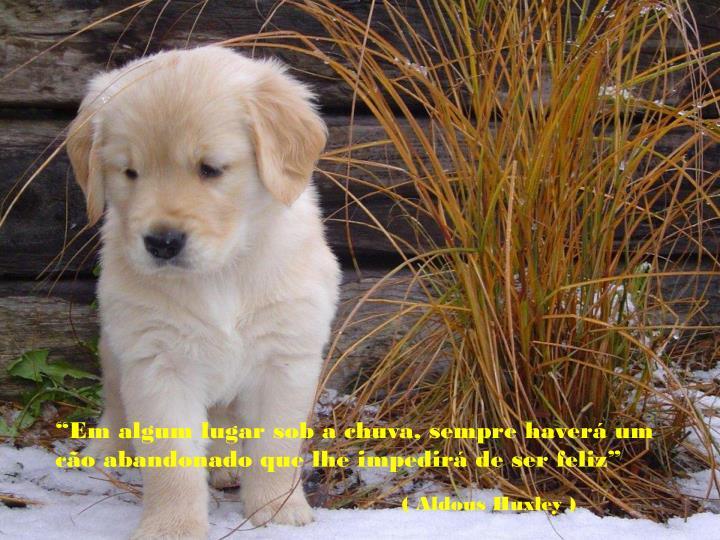 """""""Em algum lugar sob a chuva, sempre haverá um cão abandonado que lhe impedirá de ser feliz"""""""