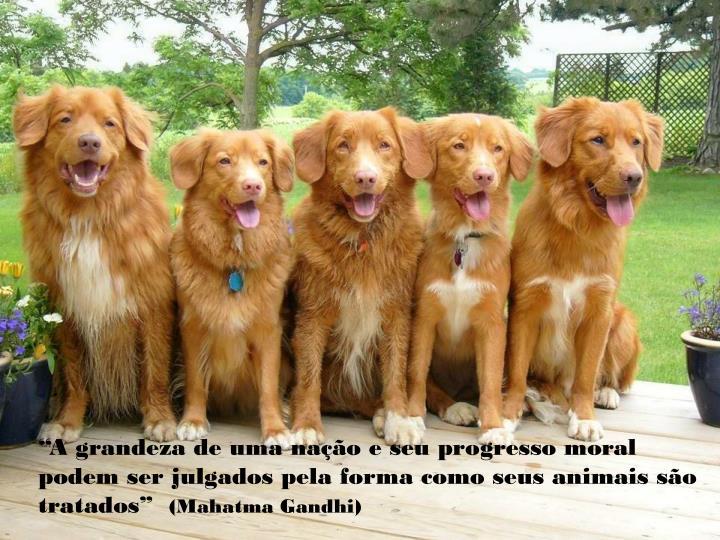 """""""A grandeza de uma nação e seu progresso moral podem ser julgados pela forma como seus animais são tratados"""""""